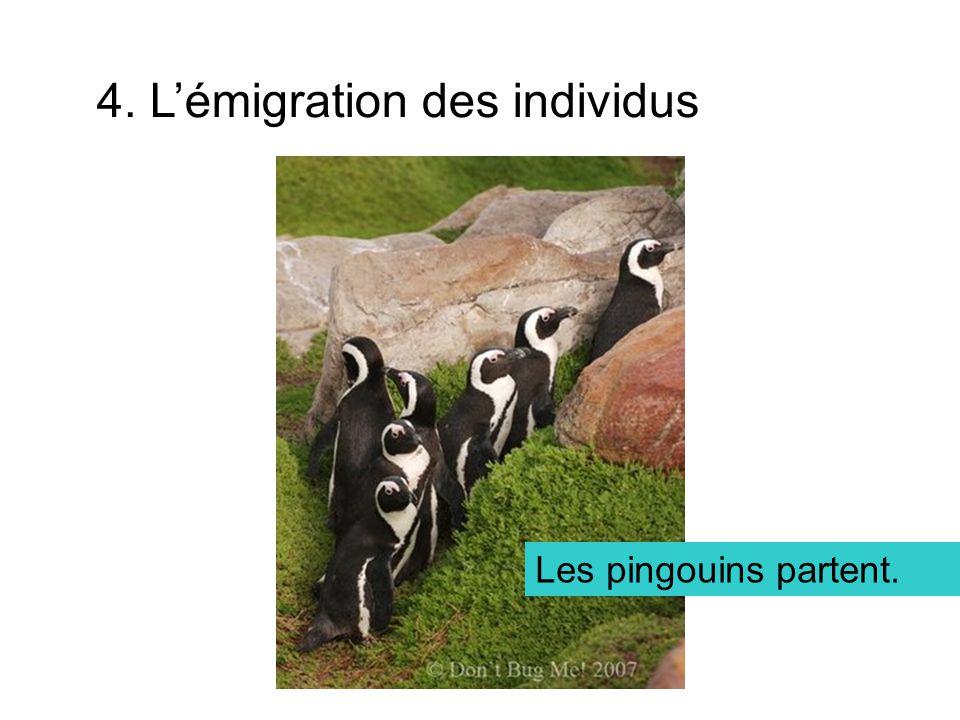 4. Lémigration des individus Les pingouins partent.