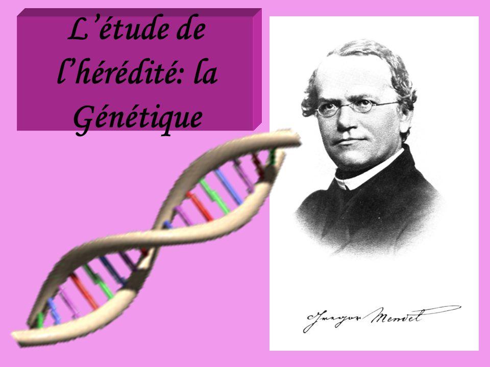 Létude de lhérédité: la Génétique