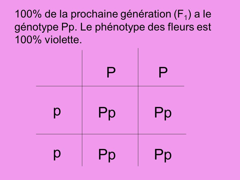 PP p p Pp 100% de la prochaine génération (F 1 ) a le génotype Pp. Le phénotype des fleurs est 100% violette.