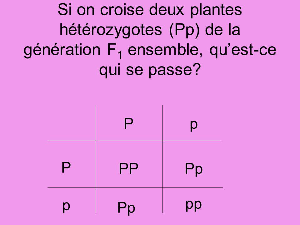 Si on croise deux plantes hétérozygotes (Pp) de la génération F 1 ensemble, quest-ce qui se passe? P P p p PPPp pp