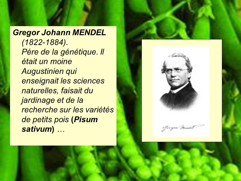 Gregor Johann MENDEL (1822-1884). Père de la génétique. Il était un moine Augustinien qui enseignait les sciences naturelles, faisait du jardinage et