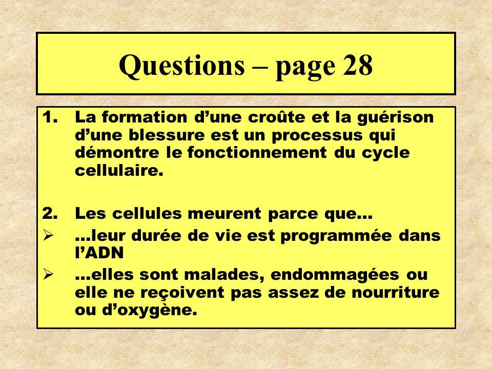 Questions – page 28 1.La formation dune croûte et la guérison dune blessure est un processus qui démontre le fonctionnement du cycle cellulaire. 2.Les