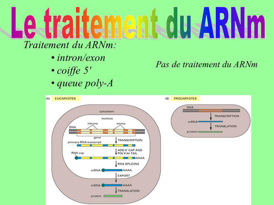 Traitement du ARNm: intron/exon coiffe 5' queue poly-A Pas de traitement du ARNm