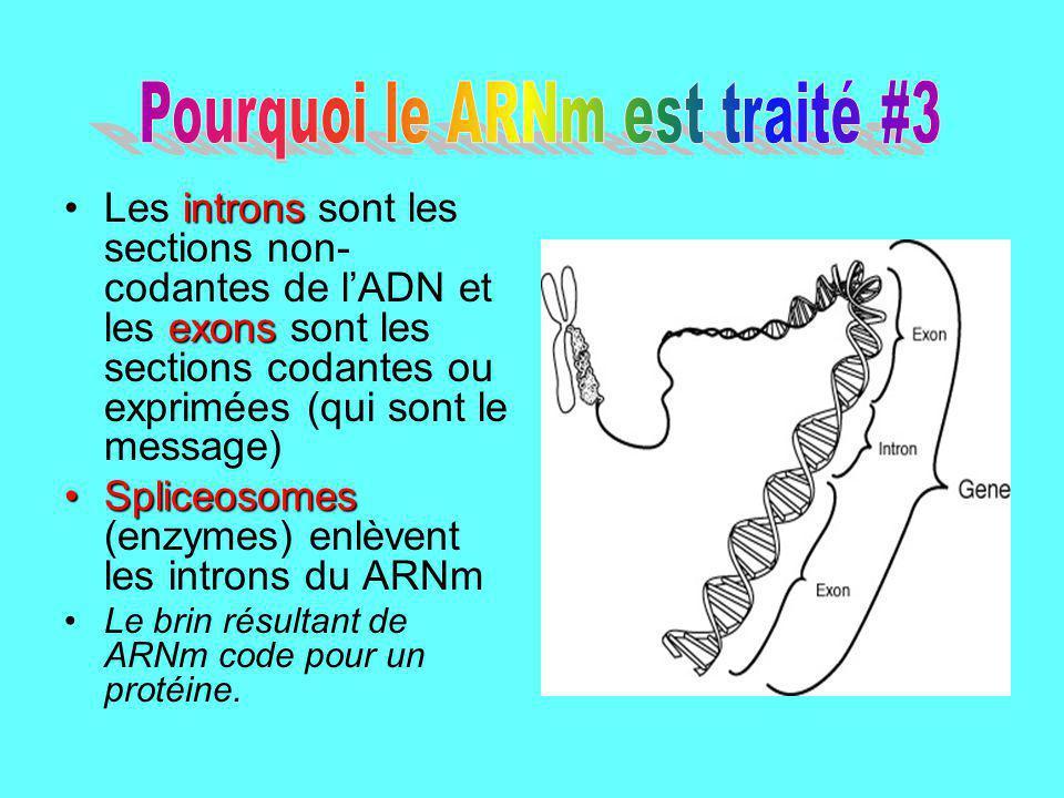 introns exonsLes introns sont les sections non- codantes de lADN et les exons sont les sections codantes ou exprimées (qui sont le message) Spliceosom