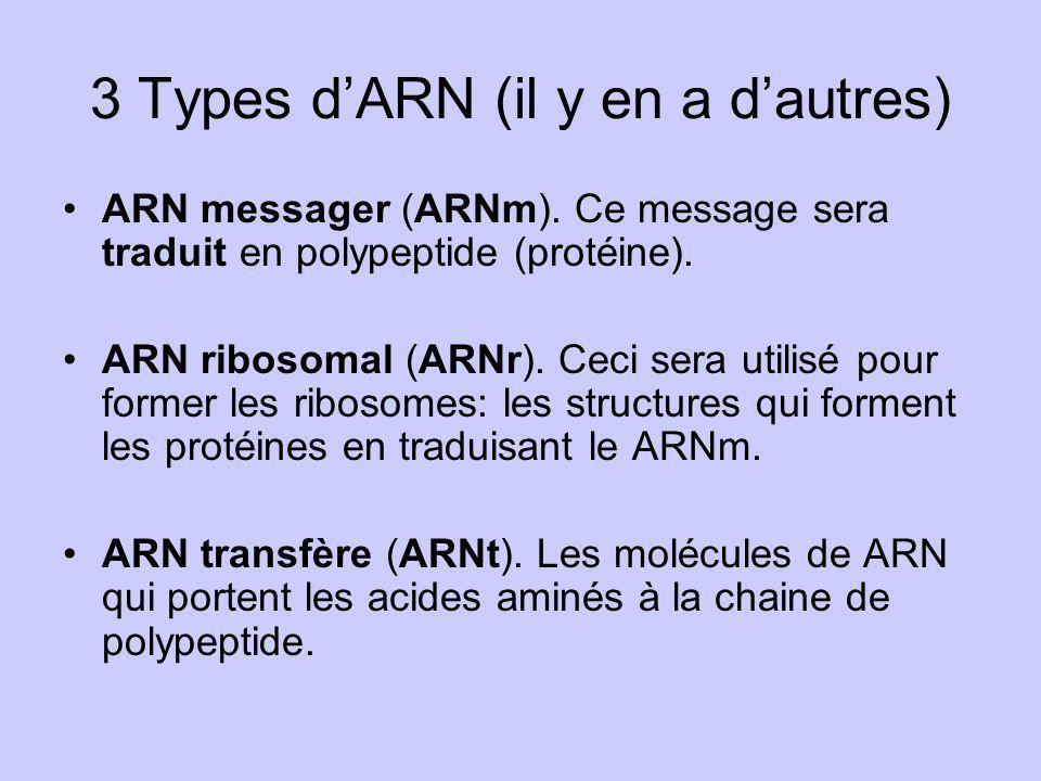 3 Types dARN (il y en a dautres) ARN messager (ARNm). Ce message sera traduit en polypeptide (protéine). ARN ribosomal (ARNr). Ceci sera utilisé pour