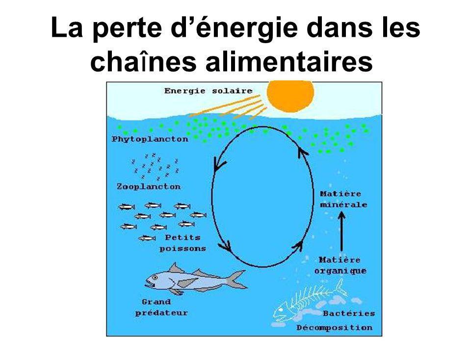 Rappel: Les chaînes et réseaux alimentaires montrent le chemin d énergie dans un écosystème.