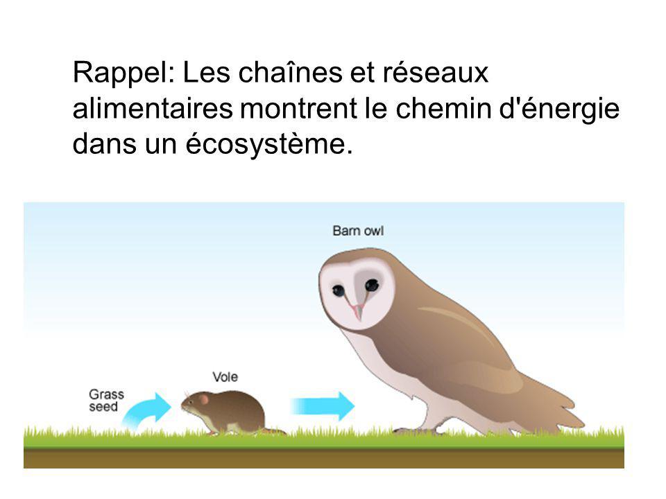 Rappel: Les chaînes et réseaux alimentaires montrent le chemin d'énergie dans un écosystème.