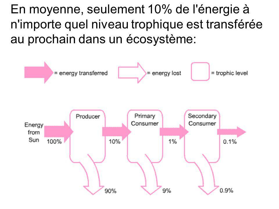 En moyenne, seulement 10% de l'énergie à n'importe quel niveau trophique est transférée au prochain dans un écosystème: