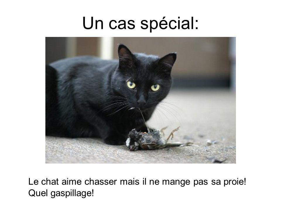 Un cas spécial: Le chat aime chasser mais il ne mange pas sa proie! Quel gaspillage!