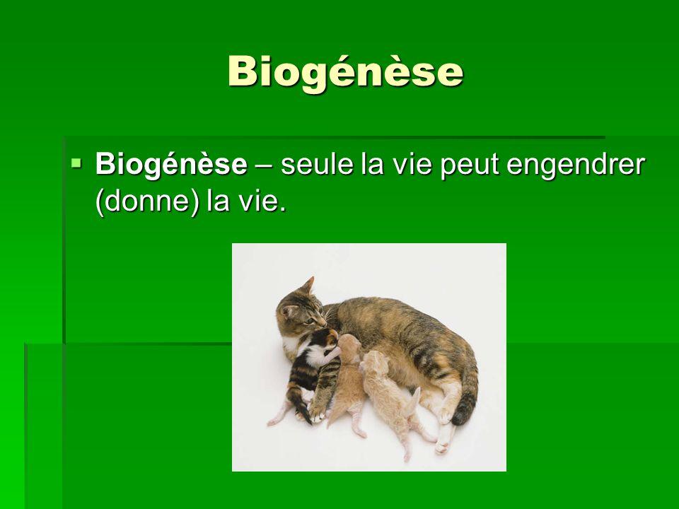 Biogénèse Biogénèse – seule la vie peut engendrer (donne) la vie. Biogénèse – seule la vie peut engendrer (donne) la vie.
