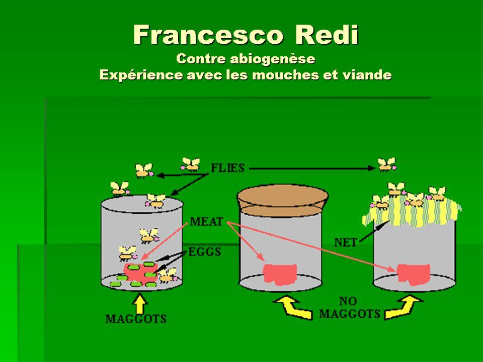 Francesco Redi Contre abiogenèse Expérience avec les mouches et viande