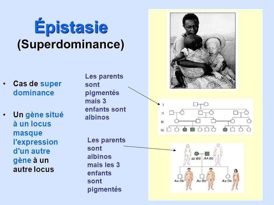 Épistasie (Superdominance) Cas de super dominance Un gène situé à un locus masque l'expression d'un autre gène à un autre locus Les parents sont pigme