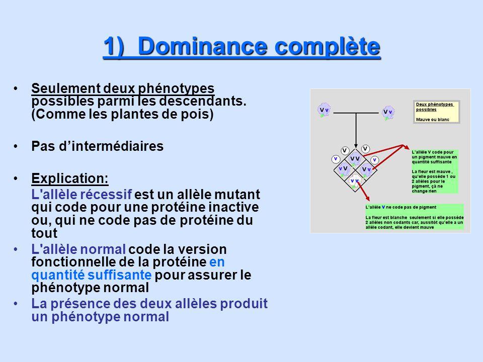2) Dominance incomplète Trois phénotypes possibles parmi les descendants Un intermédiaire entre deux autres phénotypes Explications L allèle récessif est un allèle mutant qui code pour une protéine inactive ou, qui ne code pas de protéine du tout L allèle normal code la version fonctionnelle de la protéine en quantité insuffisante pour assurer le phénotype normal La présence des deux allèles produit un phénotype intermédiaire
