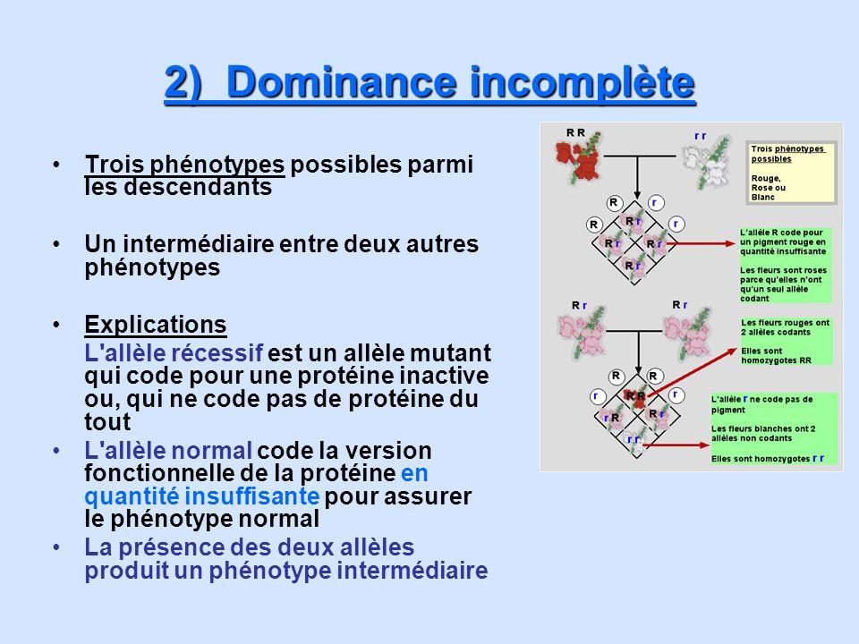 2) Dominance incomplète Trois phénotypes possibles parmi les descendants Un intermédiaire entre deux autres phénotypes Explications L'allèle récessif