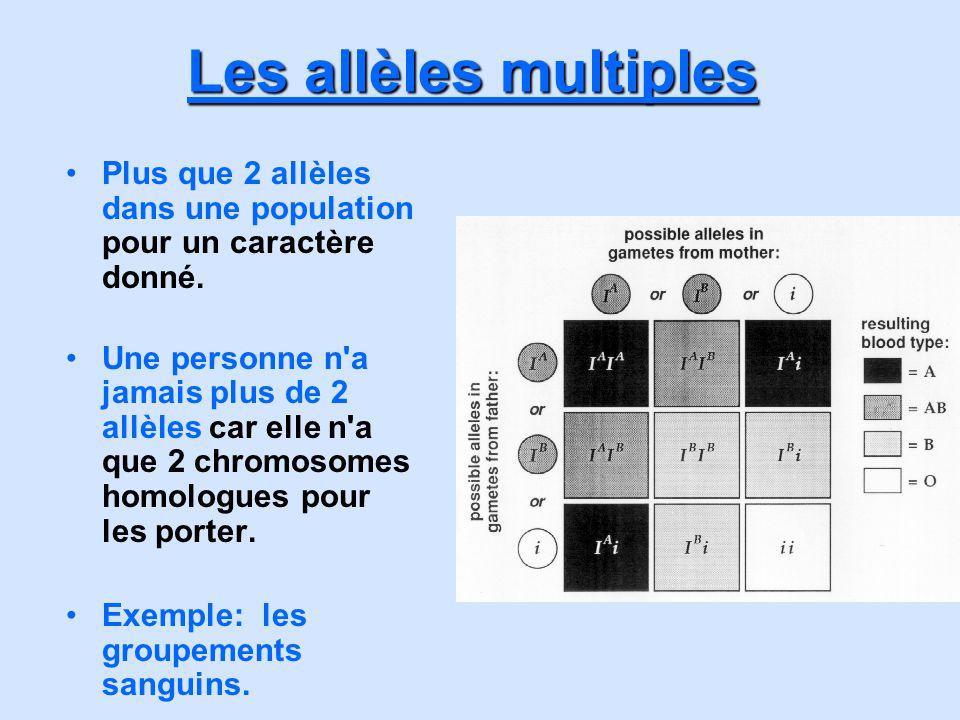 Les allèles multiples Plus que 2 allèles dans une population pour un caractère donné. Une personne n'a jamais plus de 2 allèles car elle n'a que 2 chr