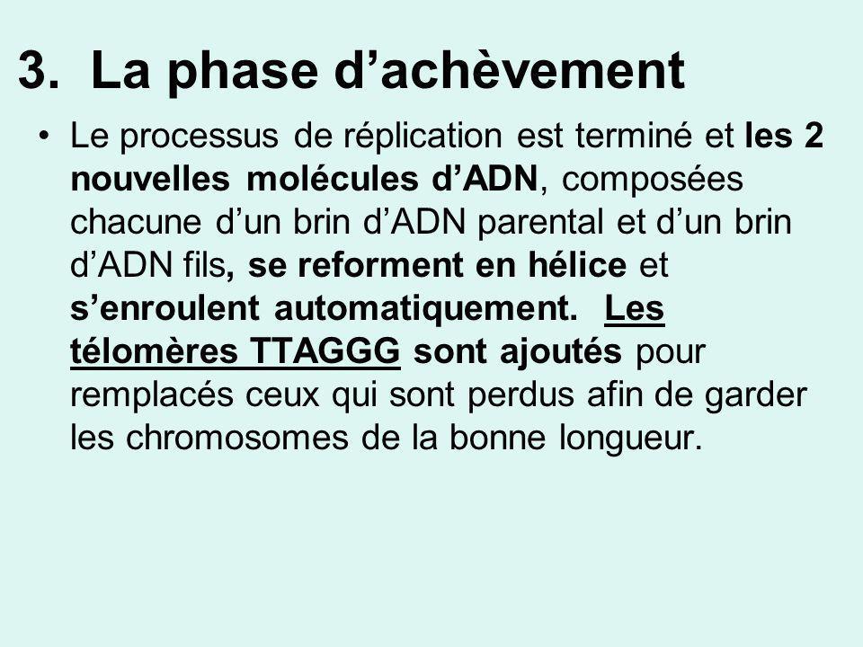 3. La phase dachèvement Le processus de réplication est terminé et les 2 nouvelles molécules dADN, composées chacune dun brin dADN parental et dun bri