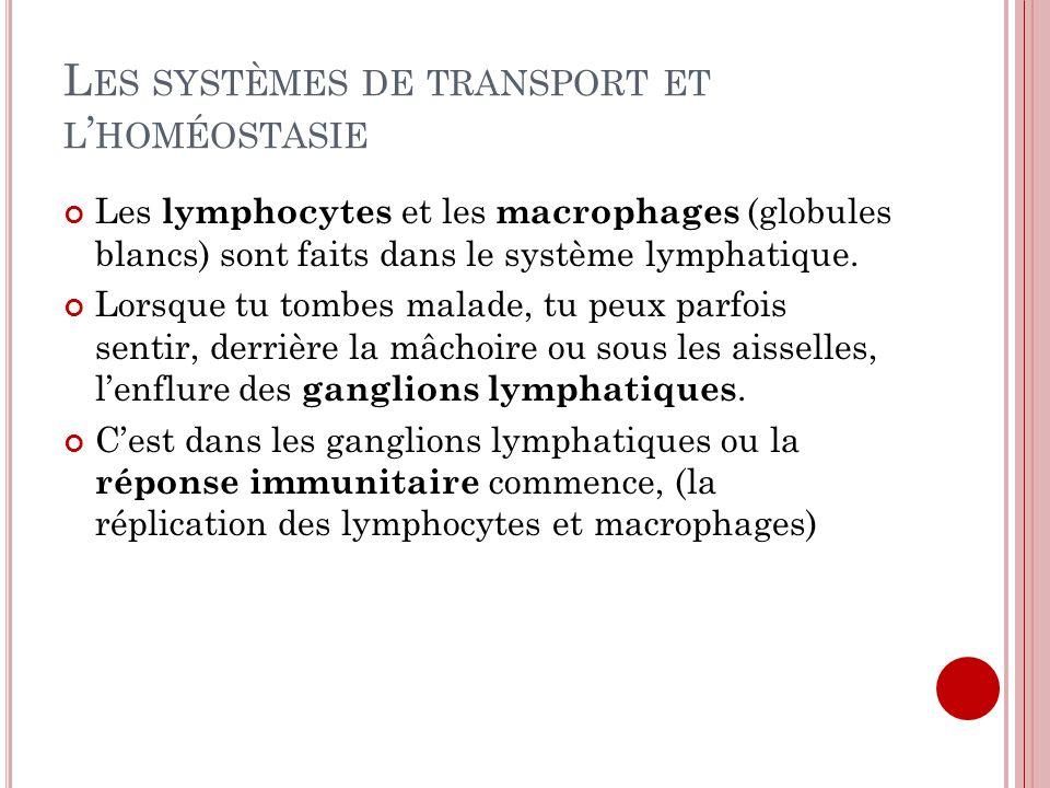 L ES SYSTÈMES DE TRANSPORT ET L HOMÉOSTASIE Les lymphocytes et les macrophages (globules blancs) sont faits dans le système lymphatique. Lorsque tu to
