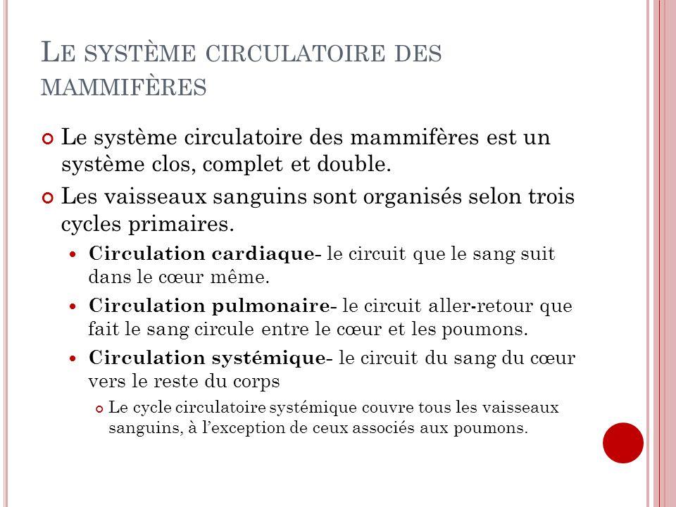 L E SYSTÈME CIRCULATOIRE DES MAMMIFÈRES Le système circulatoire des mammifères est un système clos, complet et double. Les vaisseaux sanguins sont org