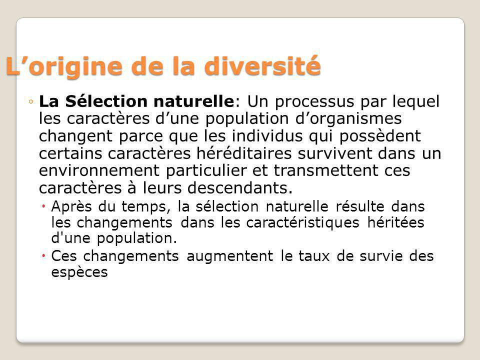 Lorigine de la diversité La Sélection naturelle: Un processus par lequel les caractères dune population dorganismes changent parce que les individus q