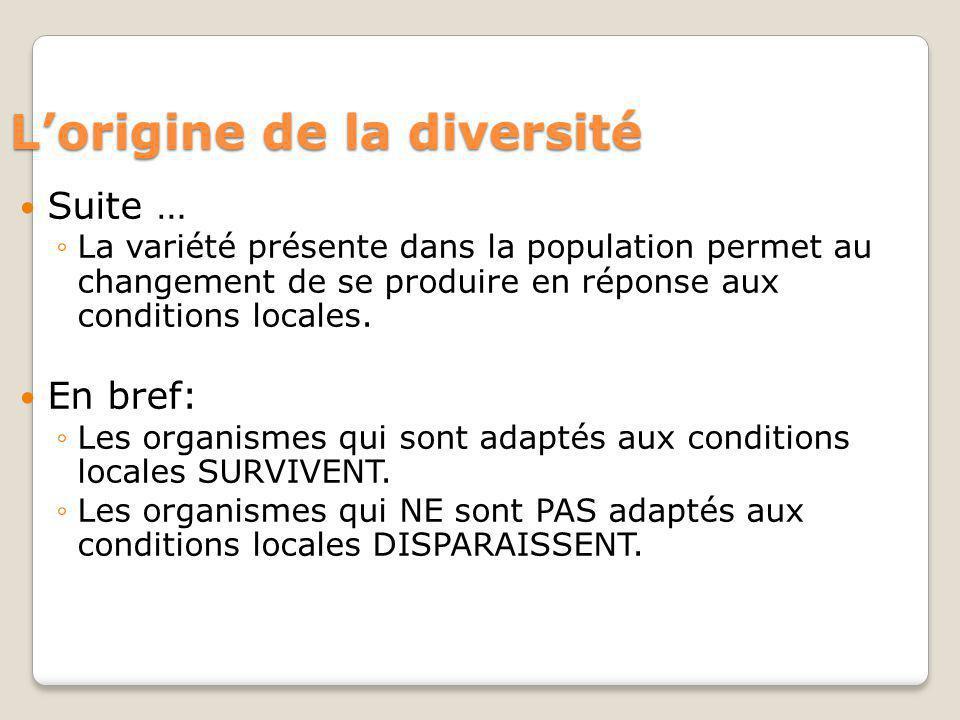 Lorigine de la diversité Suite … La variété présente dans la population permet au changement de se produire en réponse aux conditions locales. En bref