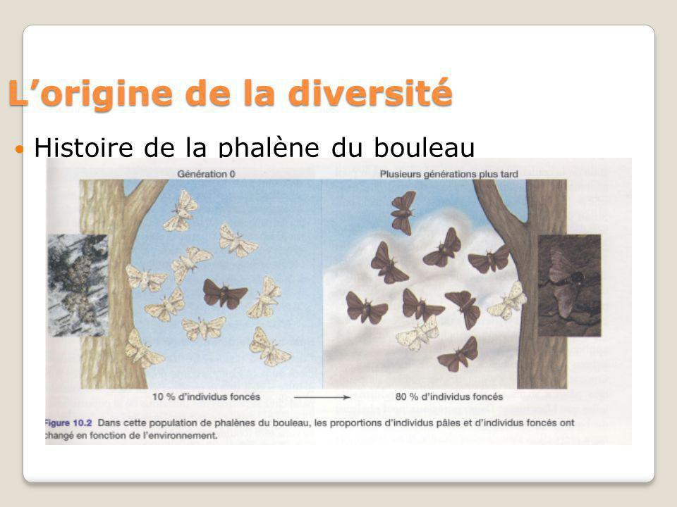 Lorigine de la diversité Histoire de la phalène du bouleau