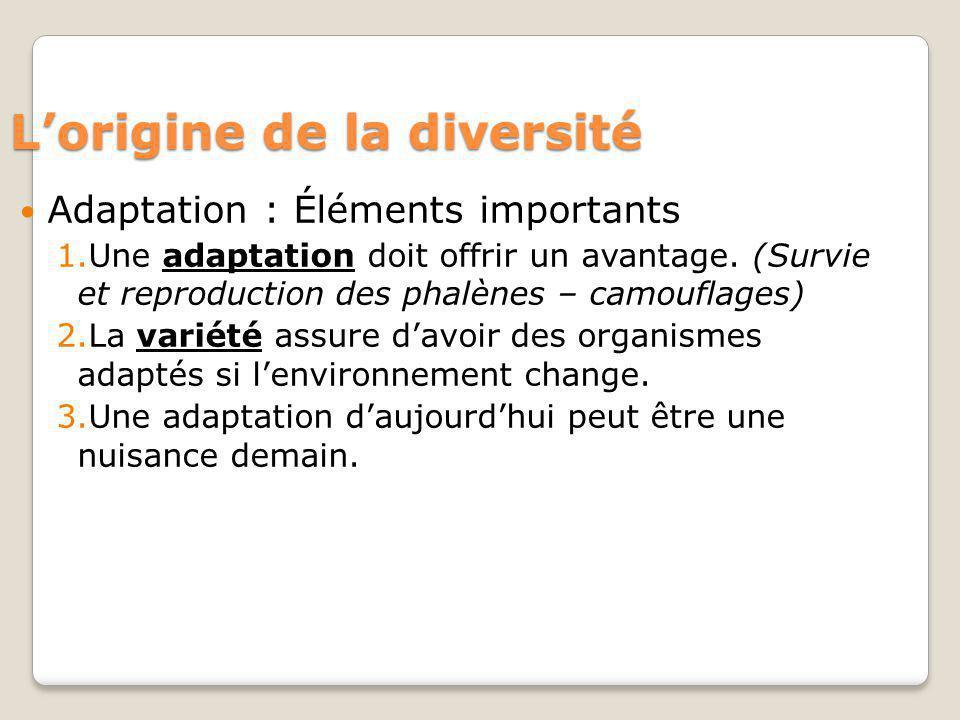 Lorigine de la diversité Adaptation : Éléments importants 1.Une adaptation doit offrir un avantage. (Survie et reproduction des phalènes – camouflages