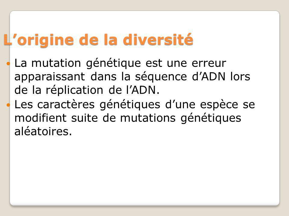 Lorigine de la diversité La mutation génétique est une erreur apparaissant dans la séquence dADN lors de la réplication de lADN. Les caractères généti