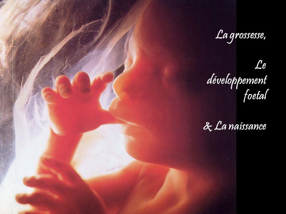 Stades de la naissance 1.Dilation 2.Expulsion 3.Délivrance