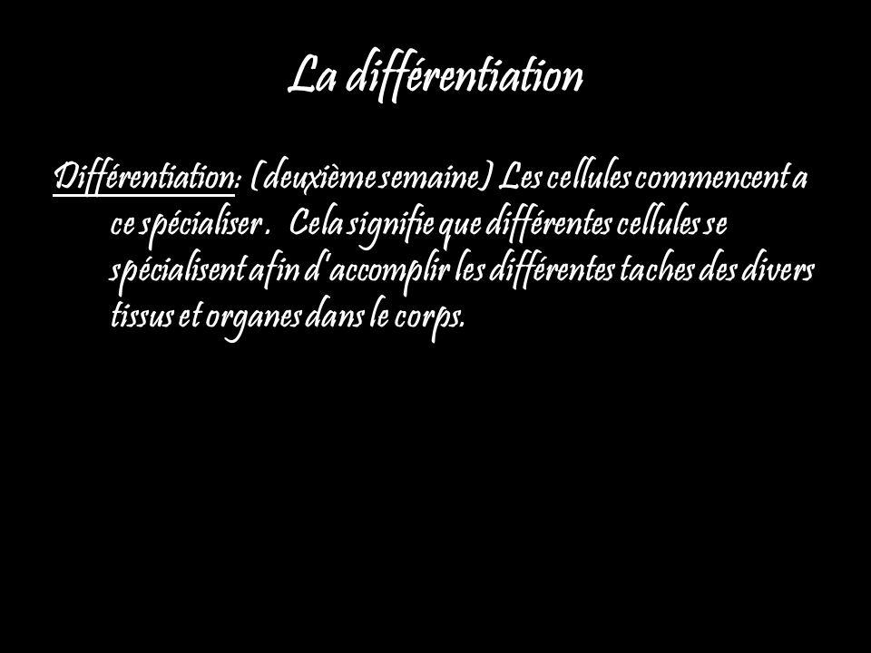 La différentiation Différentiation: (deuxième semaine) Les cellules commencent a ce spécialiser. Cela signifie que différentes cellules se spécialisen