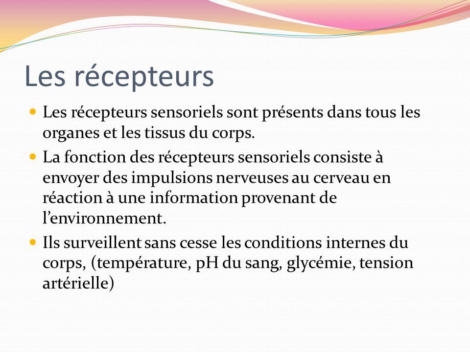 Les récepteurs Les récepteurs sensoriels sont présents dans tous les organes et les tissus du corps. La fonction des récepteurs sensoriels consiste à