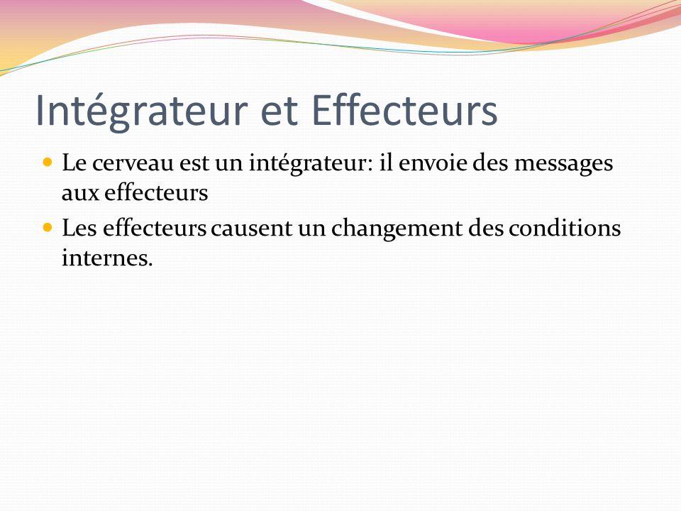 Intégrateur et Effecteurs Le cerveau est un intégrateur: il envoie des messages aux effecteurs Les effecteurs causent un changement des conditions int