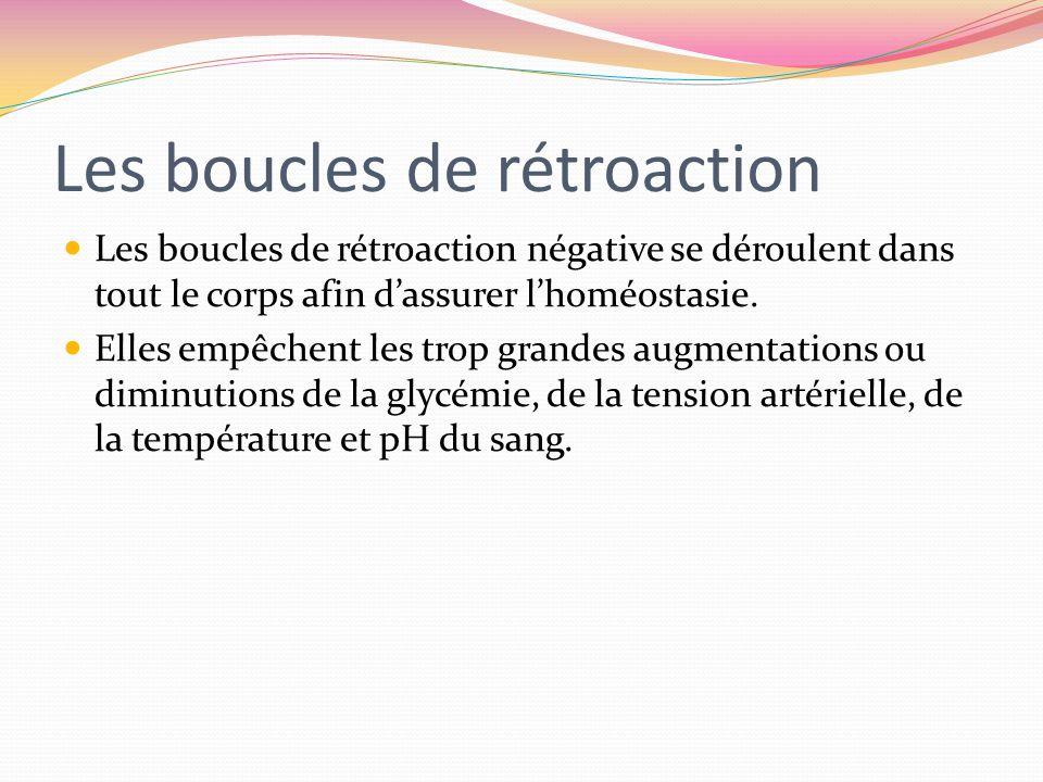 Les boucles de rétroaction Les boucles de rétroaction négative se déroulent dans tout le corps afin dassurer lhoméostasie. Elles empêchent les trop gr