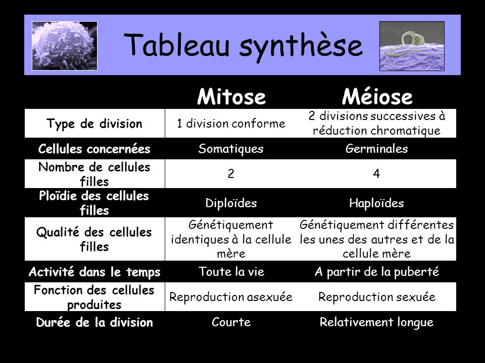 Tableau synthèse Relativement longueCourteDurée de la division Reproduction sexuéeReproduction asexuée Fonction des cellules produites A partir de la