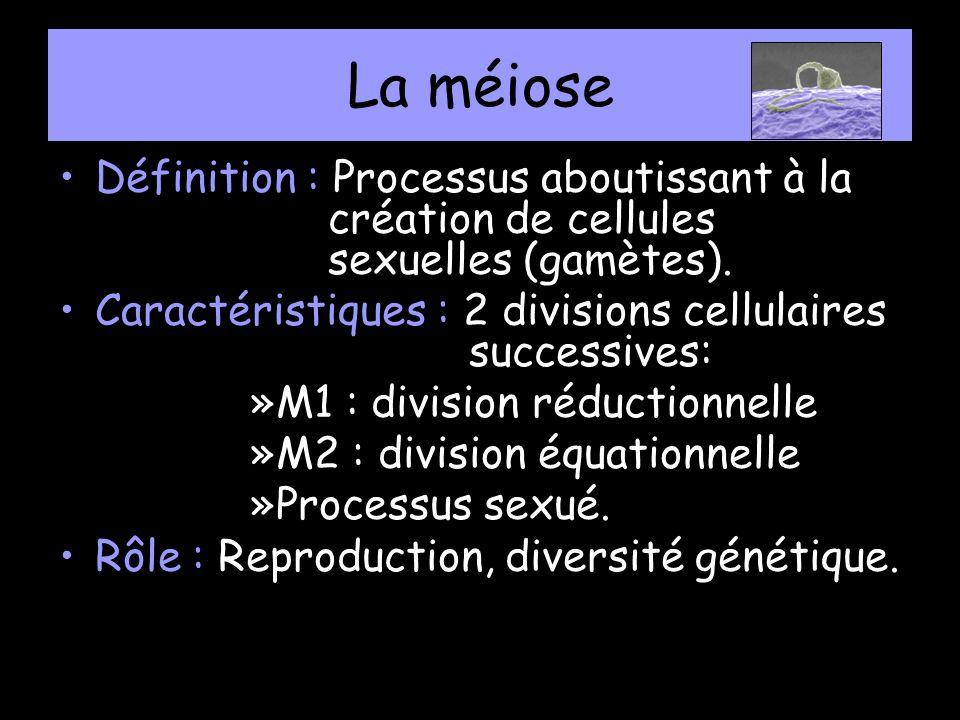 La méiose Définition : Processus aboutissant à la création de cellules sexuelles (gamètes). Caractéristiques : 2 divisions cellulaires successives: »M