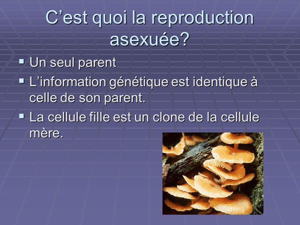 Cest quoi la reproduction asexuée? Un seul parent Un seul parent Linformation génétique est identique à celle de son parent. Linformation génétique es