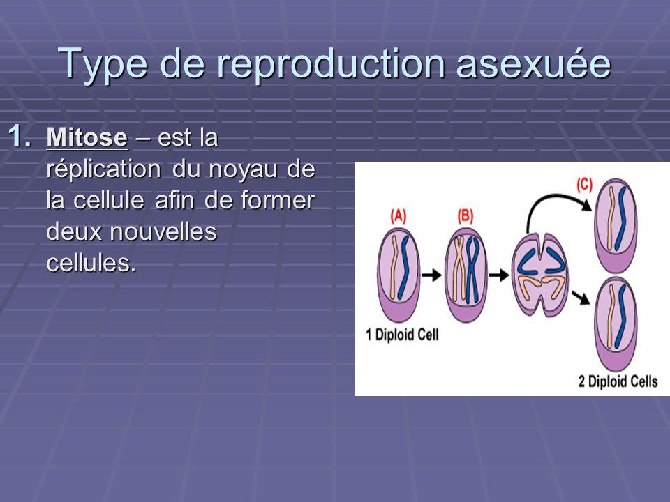 Type de reproduction asexuée 1. Mitose – est la réplication du noyau de la cellule afin de former deux nouvelles cellules.