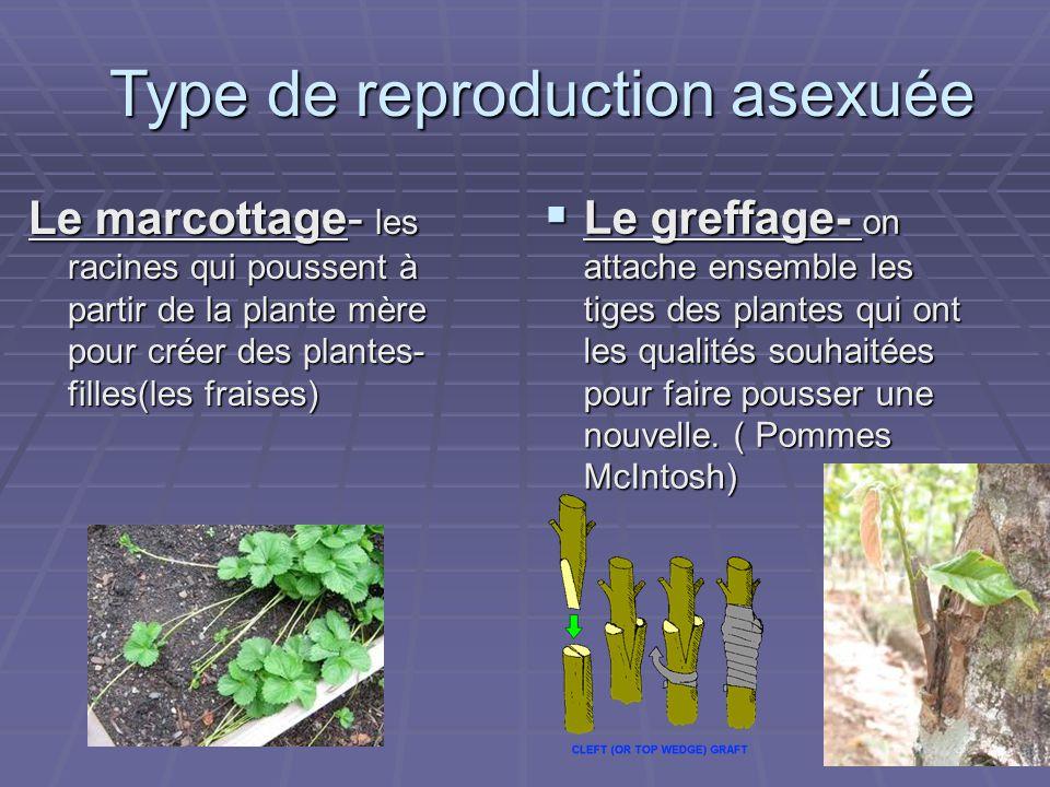 Le marcottage- les racines qui poussent à partir de la plante mère pour créer des plantes- filles(les fraises) Le greffage- on attache ensemble les ti