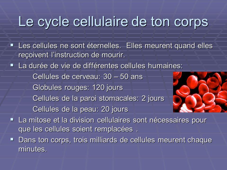 Le cycle cellulaire de ton corps Les cellules ne sont éternelles. Elles meurent quand elles reçoivent linstruction de mourir. Les cellules ne sont éte