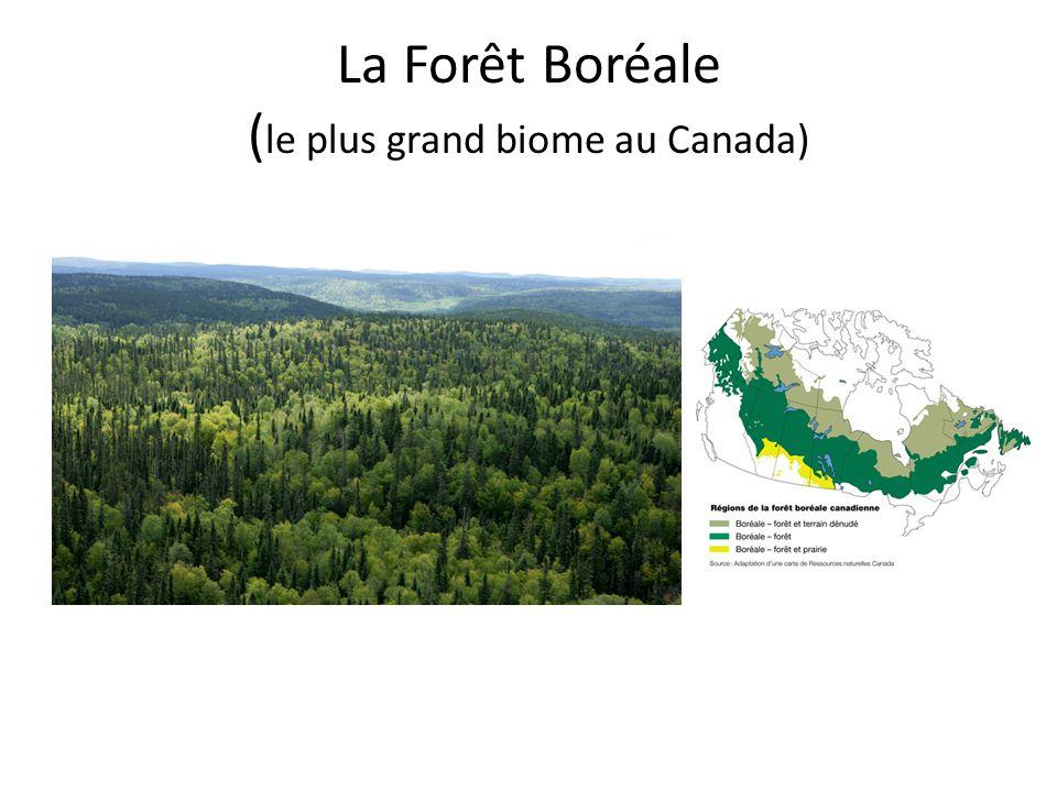 La Forêt Boréale ( le plus grand biome au Canada)