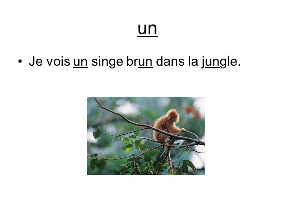 un Je vois un singe brun dans la jungle.
