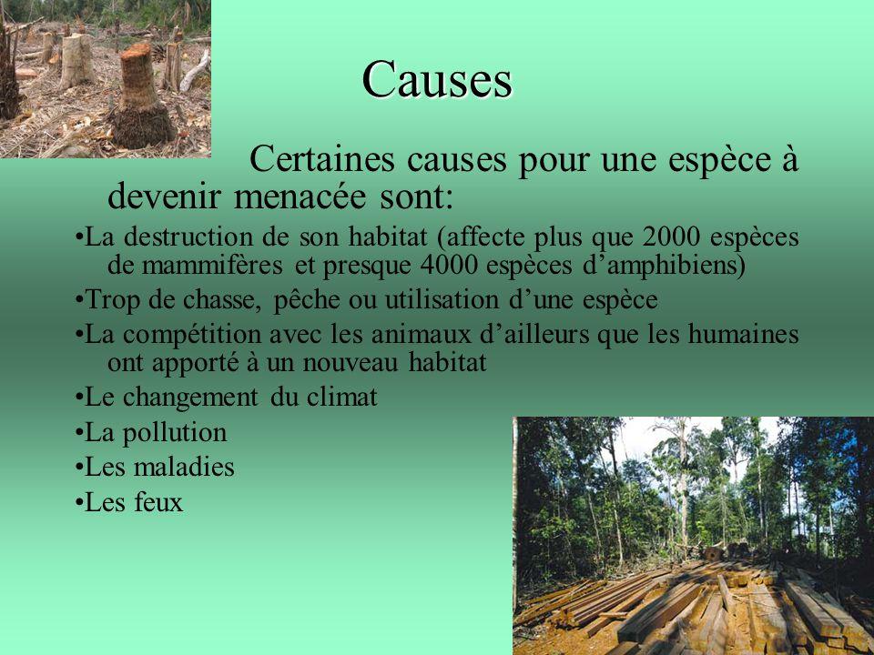 Causes Certaines causes pour une espèce à devenir menacée sont: La destruction de son habitat (affecte plus que 2000 espèces de mammifères et presque
