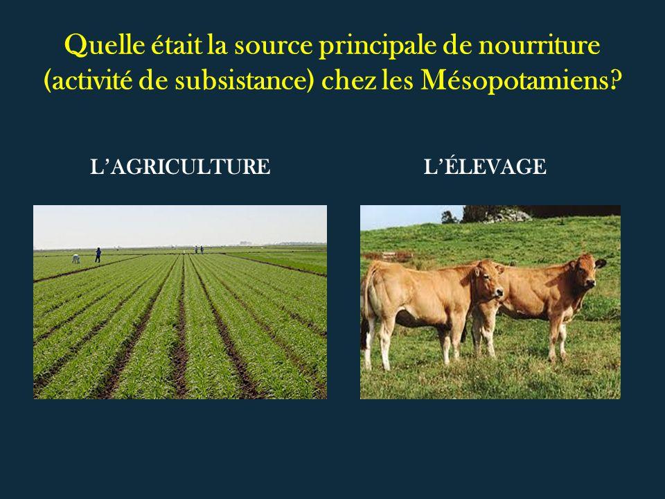 Quelle était la source principale de nourriture (activité de subsistance) chez les Mésopotamiens? LAGRICULTURELÉLEVAGE