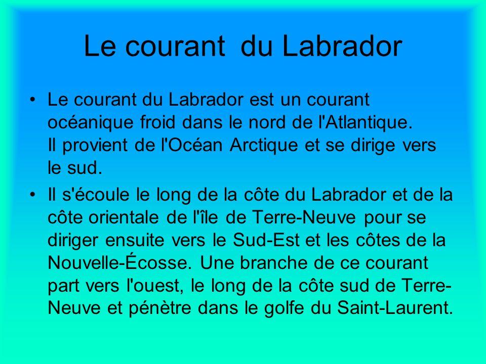 Le courant du Labrador Le courant du Labrador est un courant océanique froid dans le nord de l'Atlantique. Il provient de l'Océan Arctique et se dirig