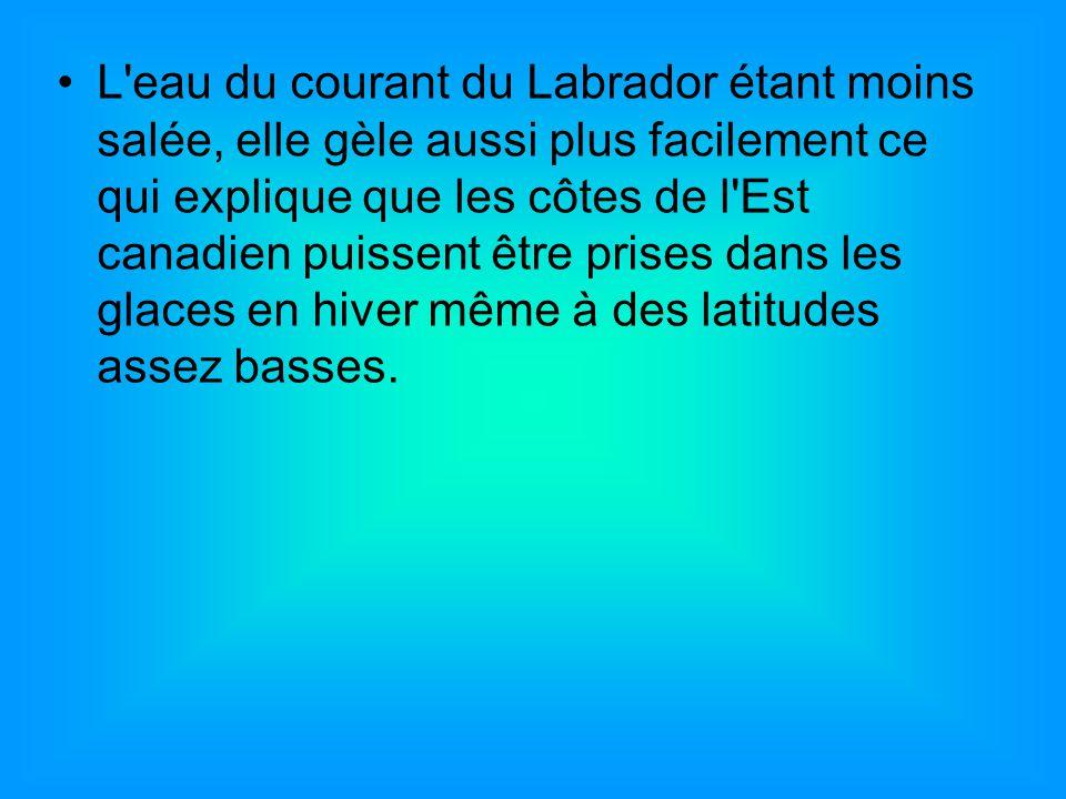 L'eau du courant du Labrador étant moins salée, elle gèle aussi plus facilement ce qui explique que les côtes de l'Est canadien puissent être prises d