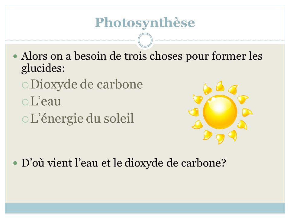 Photosynthèse Alors on a besoin de trois choses pour former les glucides: Dioxyde de carbone Leau Lénergie du soleil Doù vient leau et le dioxyde de c