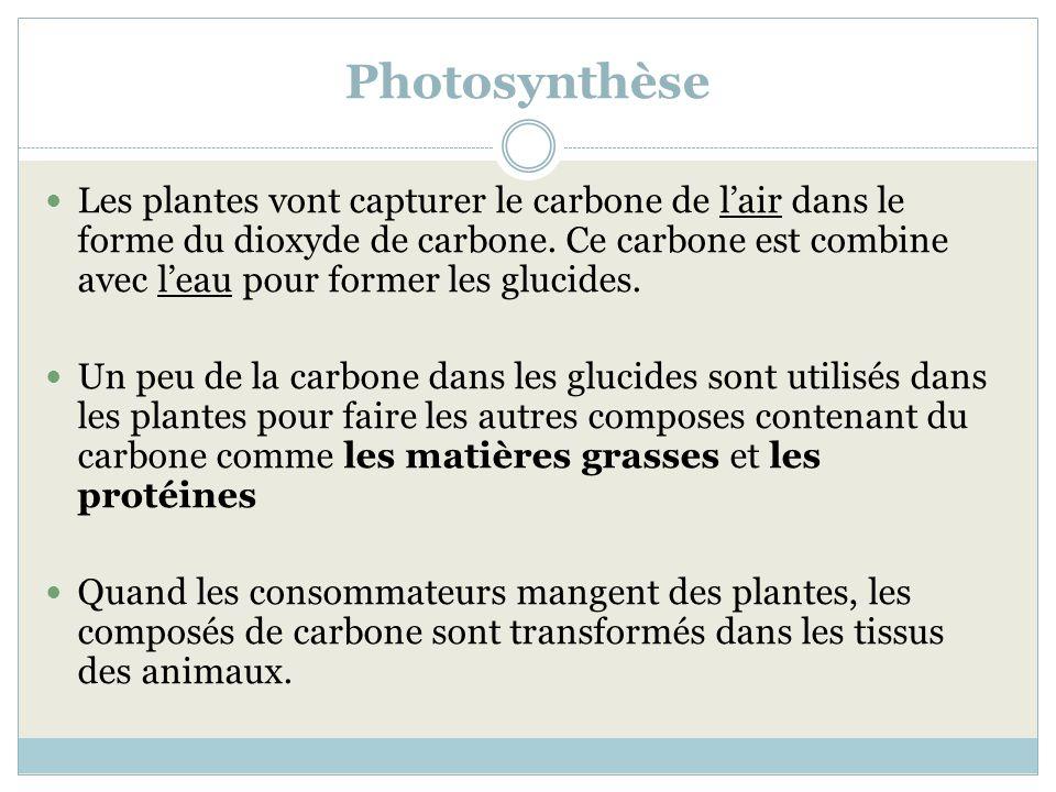 Photosynthèse Les plantes vont capturer le carbone de lair dans le forme du dioxyde de carbone. Ce carbone est combine avec leau pour former les gluci
