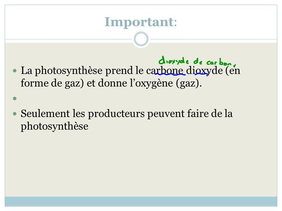 Important: La photosynthèse prend le carbone dioxyde (en forme de gaz) et donne loxygène (gaz). Seulement les producteurs peuvent faire de la photosyn
