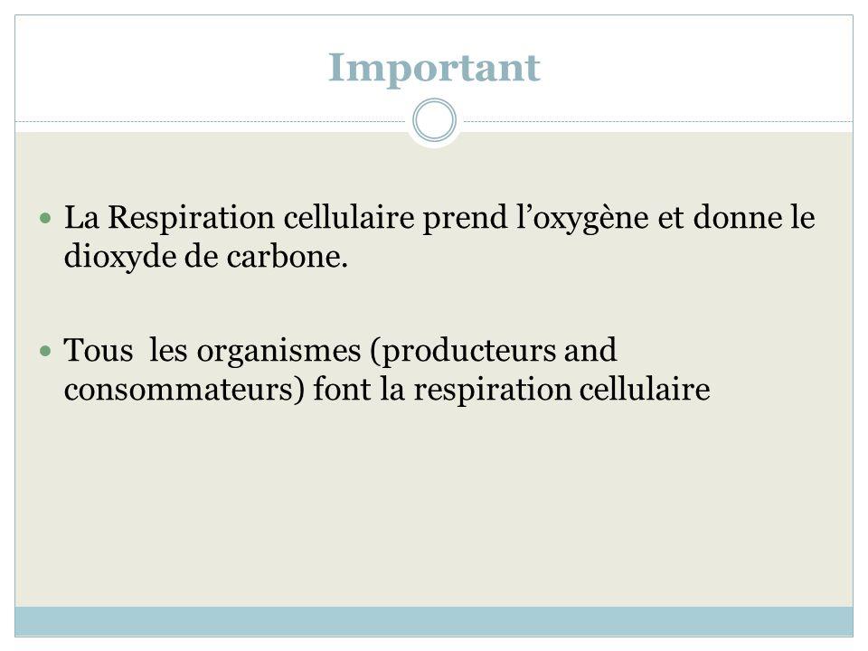 Important La Respiration cellulaire prend loxygène et donne le dioxyde de carbone. Tous les organismes (producteurs and consommateurs) font la respira