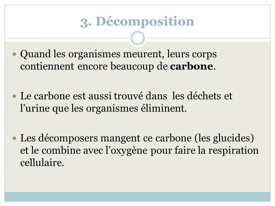 3. Décomposition Quand les organismes meurent, leurs corps contiennent encore beaucoup de carbone. Le carbone est aussi trouvé dans les déchets et lur