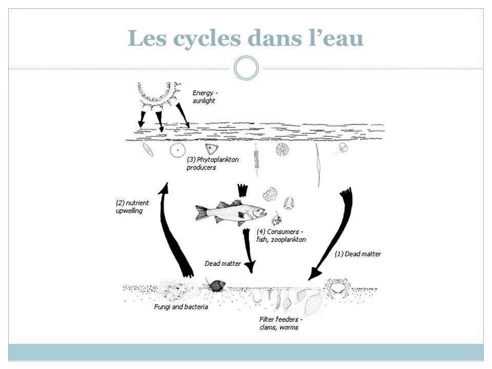 Les cycles dans leau